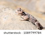 desert horned lizard in gold... | Shutterstock . vector #1089799784
