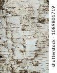natural texture of birch bark... | Shutterstock . vector #1089801719