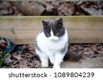 Small photo of white gray cat sitting in the yard and carefully looking somewhere