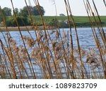 Small photo of Latvian nature landscape in summer. Water reservoir. Bents (in latin named - Agrostis) and reed grass at the lake shore. Natural design example. European continent.
