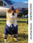 funny photo of the akita inu... | Shutterstock . vector #1089823985