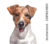 Drawing Jack Russell Terrier...