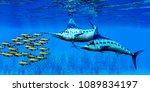 marlin and bocaccio rockfish 3d ... | Shutterstock . vector #1089834197