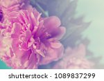 pink peony flowers on blue... | Shutterstock . vector #1089837299
