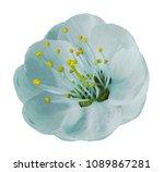 gently light turquoise  apple... | Shutterstock . vector #1089867281