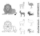 lama  ostrich emu  young... | Shutterstock .eps vector #1089868031