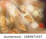 dry leaf on nature background... | Shutterstock .eps vector #1089871457