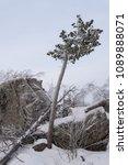 winter mountain landscape. pine ... | Shutterstock . vector #1089888071