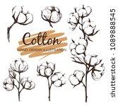 cotton   sketch illustration... | Shutterstock .eps vector #1089888545