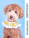 Stock photo cute poodle puppy 1089952367