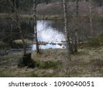 pond with swampy banks  birches ... | Shutterstock . vector #1090040051
