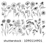 hand drawn wild hay flowers.... | Shutterstock .eps vector #1090114901