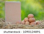 good quality chicken eggs in... | Shutterstock . vector #1090124891