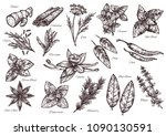 spice vector isolated sketch... | Shutterstock .eps vector #1090130591