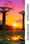 Small photo of Baobab, Adansonia or also abre bottle in Australia at sunset
