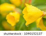 beautiful yellow flowers... | Shutterstock . vector #1090152137