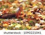 Squirrel In Autumn   Autumn...
