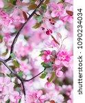 defocus floral background... | Shutterstock . vector #1090234034