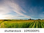 Sunrise Over Corn Field With...