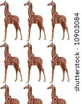 multi giraffe paste up on white | Shutterstock . vector #10903084