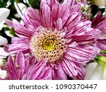 flowers  as a background | Shutterstock . vector #1090370447