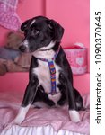 Small photo of sad puppy with a cross on a pink background (a PR photo for an annex from a shelter)