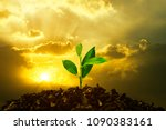 Young Plant Growing In Sunset. Save environment or Earth Planet World Concept. Mixed media.