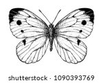 cabbage butterfly drawing on...   Shutterstock .eps vector #1090393769