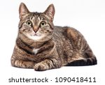 Stock photo tabby cat on white background 1090418411