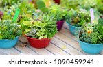 various type of succulent... | Shutterstock . vector #1090459241