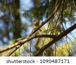 Small photo of Forest lark in the Park lark