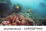 fish and coral reef at diving.... | Shutterstock . vector #1090587944