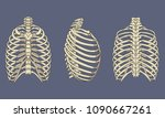 vector illustration of human... | Shutterstock .eps vector #1090667261