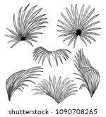 palm fan vector on white... | Shutterstock .eps vector #1090708265
