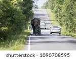 closed up adolescent elephant...   Shutterstock . vector #1090708595