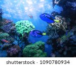 Blue Tang Fishes And Coral Ree...