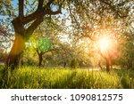 summer blossoming apple orchard ... | Shutterstock . vector #1090812575