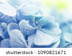 young hydrangea flower with... | Shutterstock . vector #1090821671