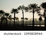 silhouette tree palm sunset in... | Shutterstock . vector #1090828964