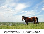 a horse on a chain grazing in... | Shutterstock . vector #1090906565