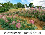 cebu city  philippines apr 25...   Shutterstock . vector #1090977101