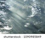 Smoke: shafts of sunlight passing through smoke in a woodland