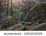 forest details  rock and woods.   Shutterstock . vector #1091010539