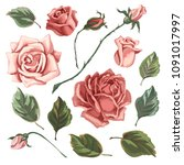 set of roses in vintage style.... | Shutterstock .eps vector #1091017997