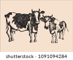 vector sketch cow and her calf... | Shutterstock .eps vector #1091094284