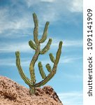 close u of cactus at desert | Shutterstock . vector #1091141909