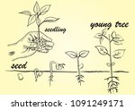 seed step to grow up | Shutterstock .eps vector #1091249171