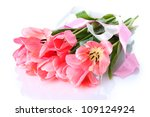 beautiful pink tulips isolated... | Shutterstock . vector #109124924