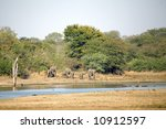 Постер, плакат: Elephants in the Kruger