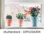 beautiful  trendy succulents... | Shutterstock . vector #1091326304